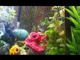My Molly/Platy 20 Gallon Fish Aquarium Update