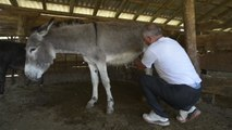 Most Expensive Cheese in the World Comes from Donkey's Milk