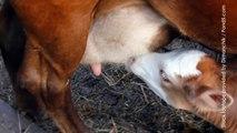 Emily Deschanel: Behind the Scenes in the Dairy Industry
