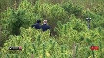 WEED 3 : La révolution du cannabis, reportage du Dr Sanjay Gupta (CNN) (2015) (STFR)