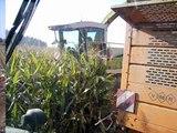 Maisernte 2007 und Pflügen
