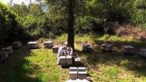 L'Européen d'à côté : Récolte artisanale de miel en Midi-Pyrénées