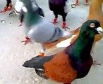 اجمل الطيور.mp4