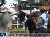 VII EXPOBRAHMAN - TOURO SENIOR