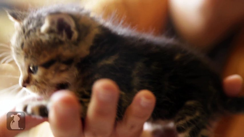 The Most Magically Cute Kitten You'll See All Day
