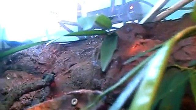 Terrario Casero camaleones