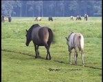Vorschau: Haltungsbedingte Fortbewegung bei Pferden (Nr. 63)