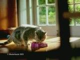 Pub Whiskas: La souris qui danse