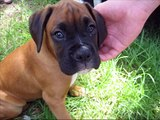 pets and dogs for children, popular dog breeds, dog care, animals for children, pictures, names