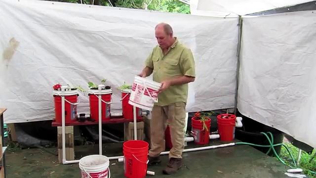 Five Gallon aquaponic system