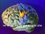 GN 009 motorische Reizleitung - SD PAL / GN 009  motor cortex - SD PAL