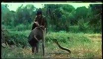 kiran collections moneky Vs King Cobra