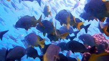 Underwater in the Galapagos Islands: Sharks, Sea Turtles, Sea Lions, and Rays