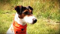 TRICK DOGS -  Film Stars auf vier Pfoten (Clip 5)