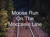 Pacing Two Moose With Our Freight Train