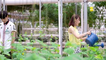 閃亮茗天 第31集 Tea Love Ep31