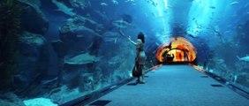 Aquarium at The Dubai Mall, Downtown Dubai