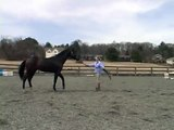 Groundwork Training With a Young Horse : Training a Young Horse to Go Forward & Come Back