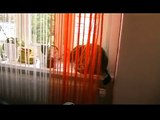 Funny Katzen Clip - witzig - lustig - lachen