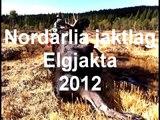 Elgjakt 2012 med hodekamera. Bull moose 283 kg