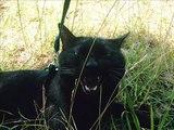 Drôles de chats - funny cats