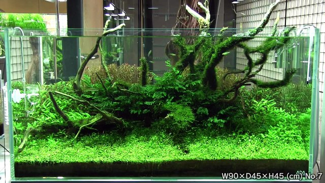 [ADA view 354] Follow-up video of NA Gallery aquariums.