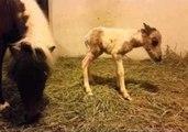 Newborn Foal Stretches Its Legs