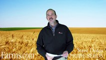 Farms.com Wheat Report: How Farmers Will Get Better Wheat Varieties With UPOV 91.