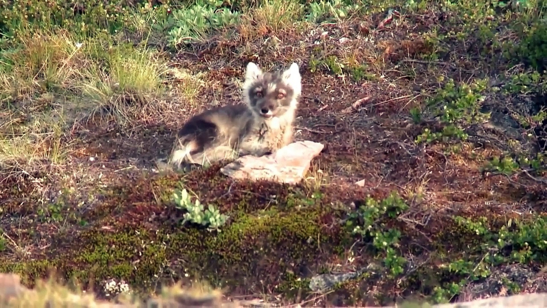 WildLife Sanctuary - Arctic WildLife Refuge - greenland