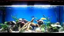 mon premier aquarium et mes poissons