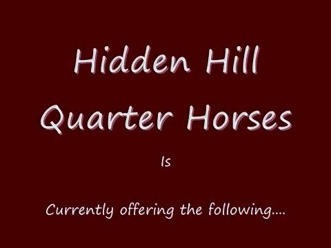 Horses For Sale, Barrel Horses/Prospects, Stallion