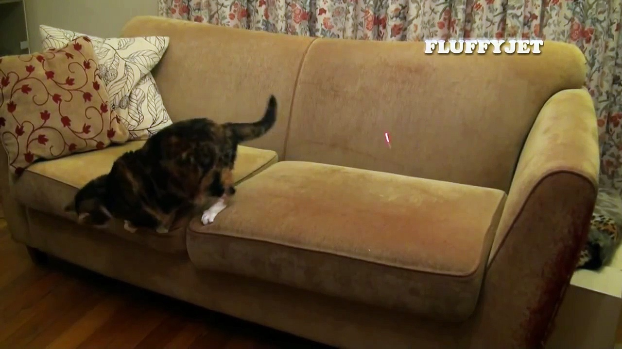 Cute Cat Plays Fetch With Laser Pointer (funny cat video) Hilarious!! OMG Kitty VS Scary Thing!!
