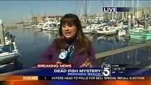 Dead Fish Redondo Beach - Millions of  Dead Fish Found Off Redondo Beach pier