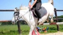 Car le vrai amour avec son cheval est réciproque ...
