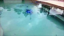 Maytronics Dolphin M4