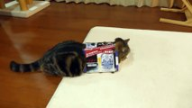 Ce chat adore les boites en carton, surtout les petites boites!