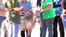 Equine Therapy For Addiction | Drug Rehab | Alcohol Rehab | The Sundance Center