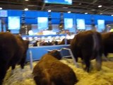 SALON AGRICULTURE PARIS SIA 2012 #23 (Vache)