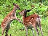 Animali e Natura