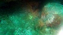 Plongée Cap Creus Massa d'Or 2012, mérous daurades et loups (30/06).