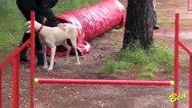 APBW 11 NOVEMBRE 2014 Agility au Club Canin La Valette