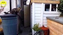 Drôles De Vidéos De Chats Drôles Blagues Drôles Vidéos Drôles D'Animaux Drôle De Bébé 2015