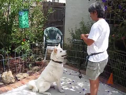Dog Training Tips:  Collar Work