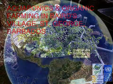 Barbados LD Aquaponics &Organic Farming in Baird's Village