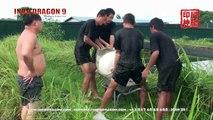 INDO DRAGON 9 VIDEO - AROWANA FARM RAFFLES AROWANA - SINGAPORE