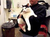 Adopted!  TREVOR is a lap cat who craves attention.  Very friendly cat at Noah's Kingdom