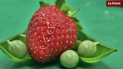 Les petits pois à la fraise d'Alain Passard