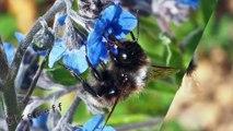 1/1 Tourisme en Bolivie au Lac Titicaca Découvrez l'ile du Soleil ses insectes et ses fleurs -- Visit Bolivia on Lake Titicaca Discover sun island insects and flowers -- Tourismus in Bolivia Erreichen Sonneninsel --  Turismo in Bolivia Lago Titicaca