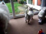 The Fluffters Howl