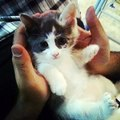 #animals #animal #pet #TagsForLikes #dog #cat #dogs #cats #photooftheday #cute #pets #instagood #a
